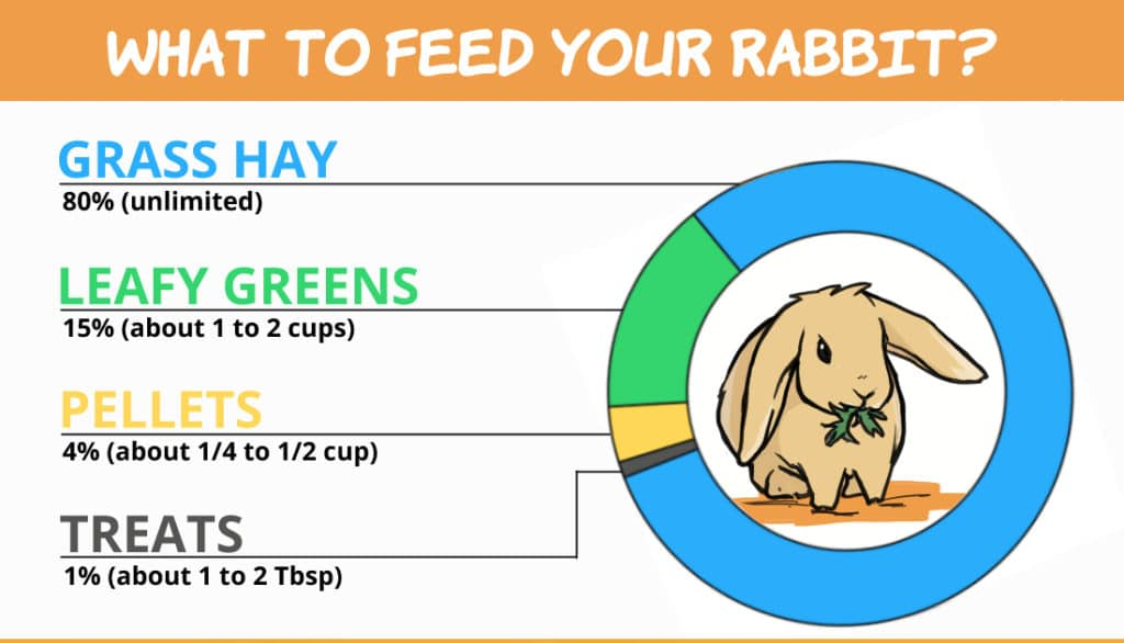 Graph: What to feed your rabbit? 80% hay, 15% leafy greens, 4% pellets, 1% treats