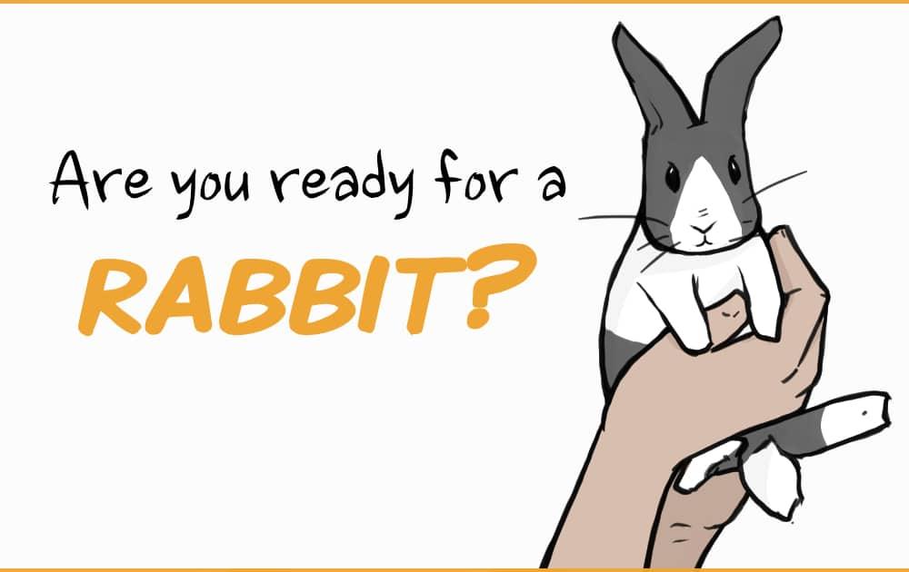 hands holding a rabbit