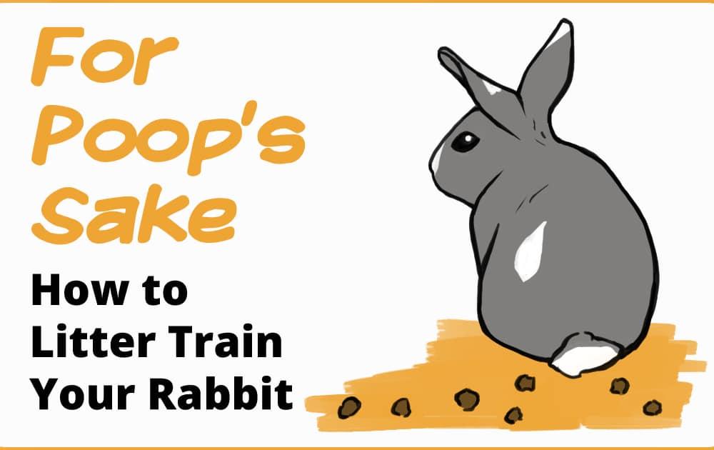 rabbit pooping