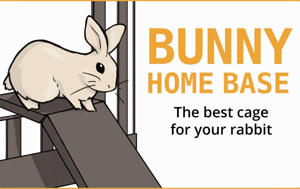 bunny on a ramp