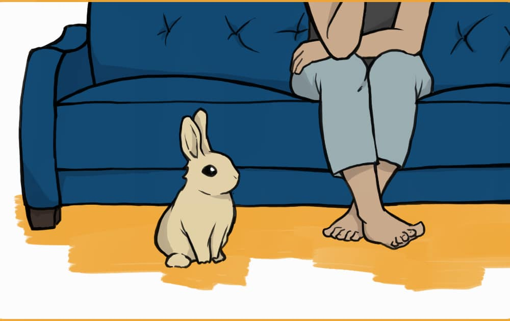 bunny sitting by a couch