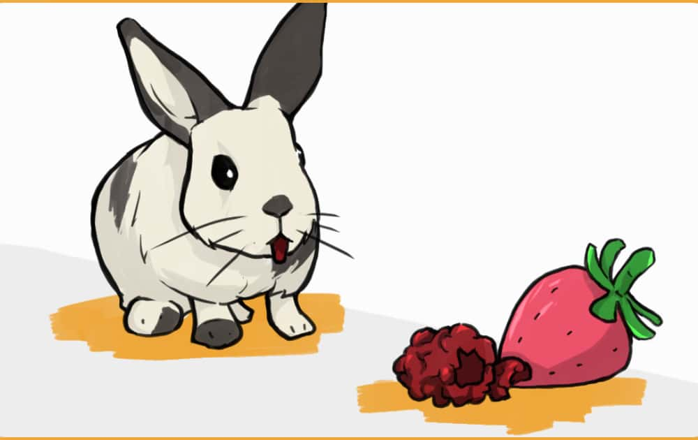 rabbit staring at delicious berries