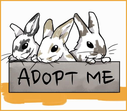 adopt BABY RABBITS
