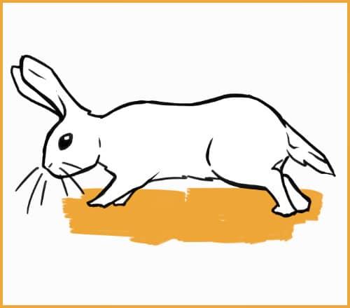 curious or cautious rabbit