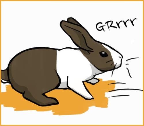 rabbit growling