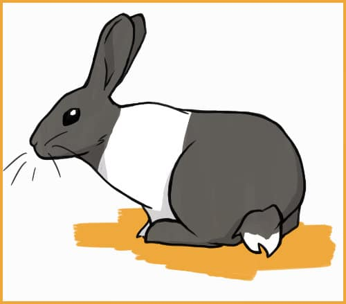 a dutch rabbit