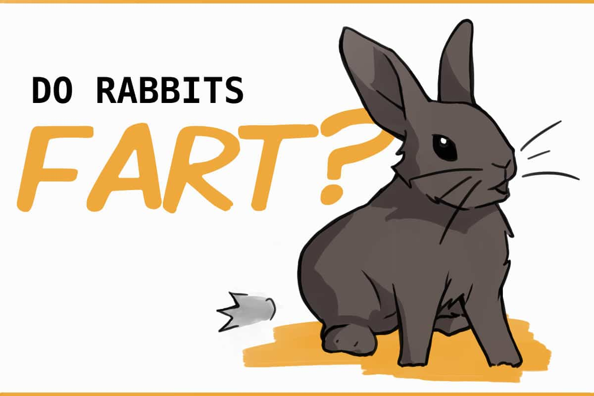 do rabbits fart?