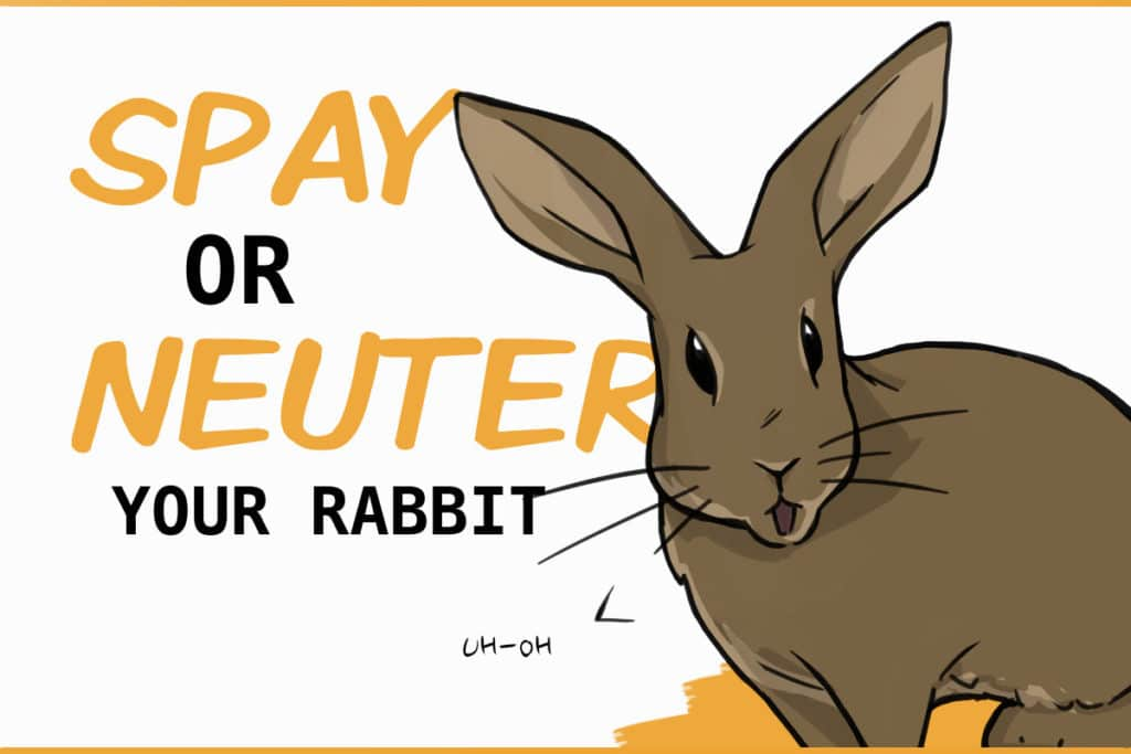 Spay or Neuter your rabbit