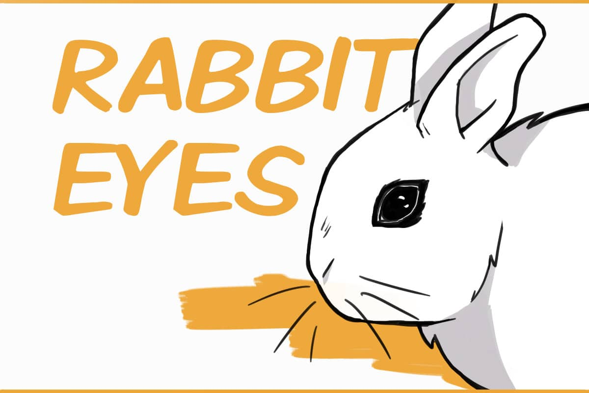 rabbit eyes