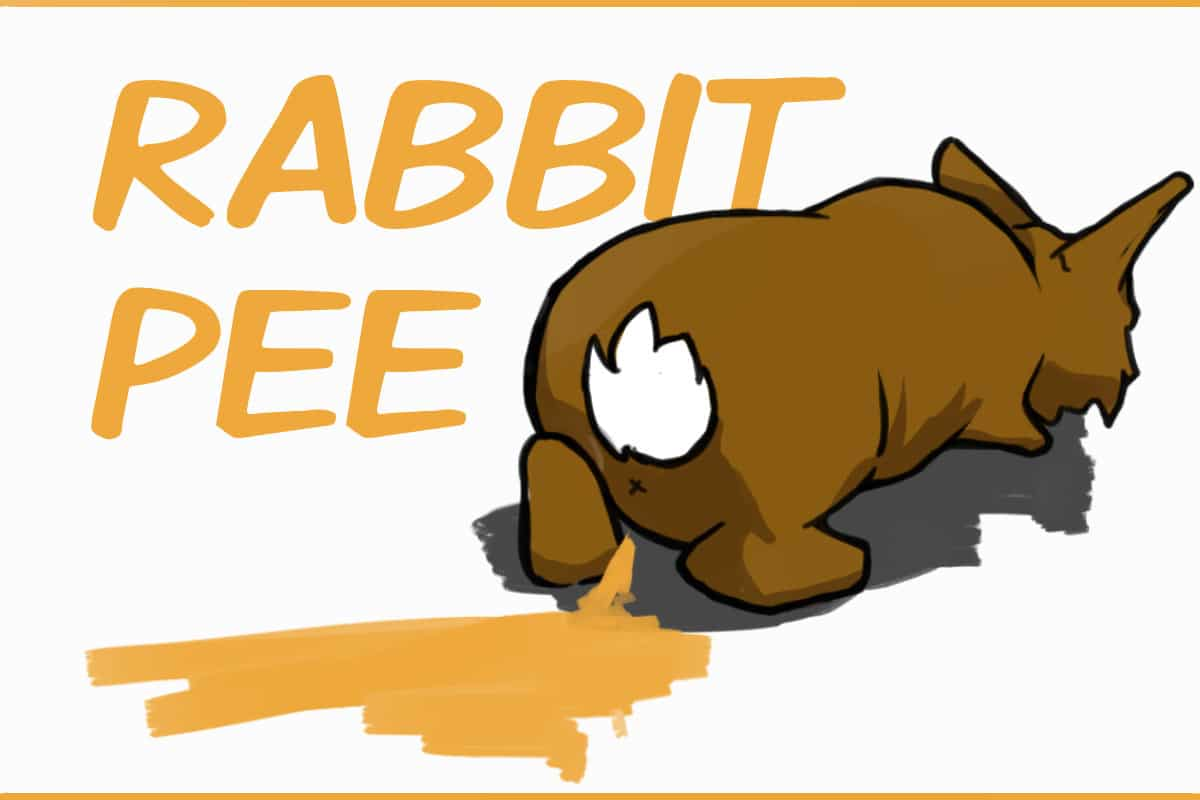Rabbit Urine: What Pee Tells You About A Rabbit's Health