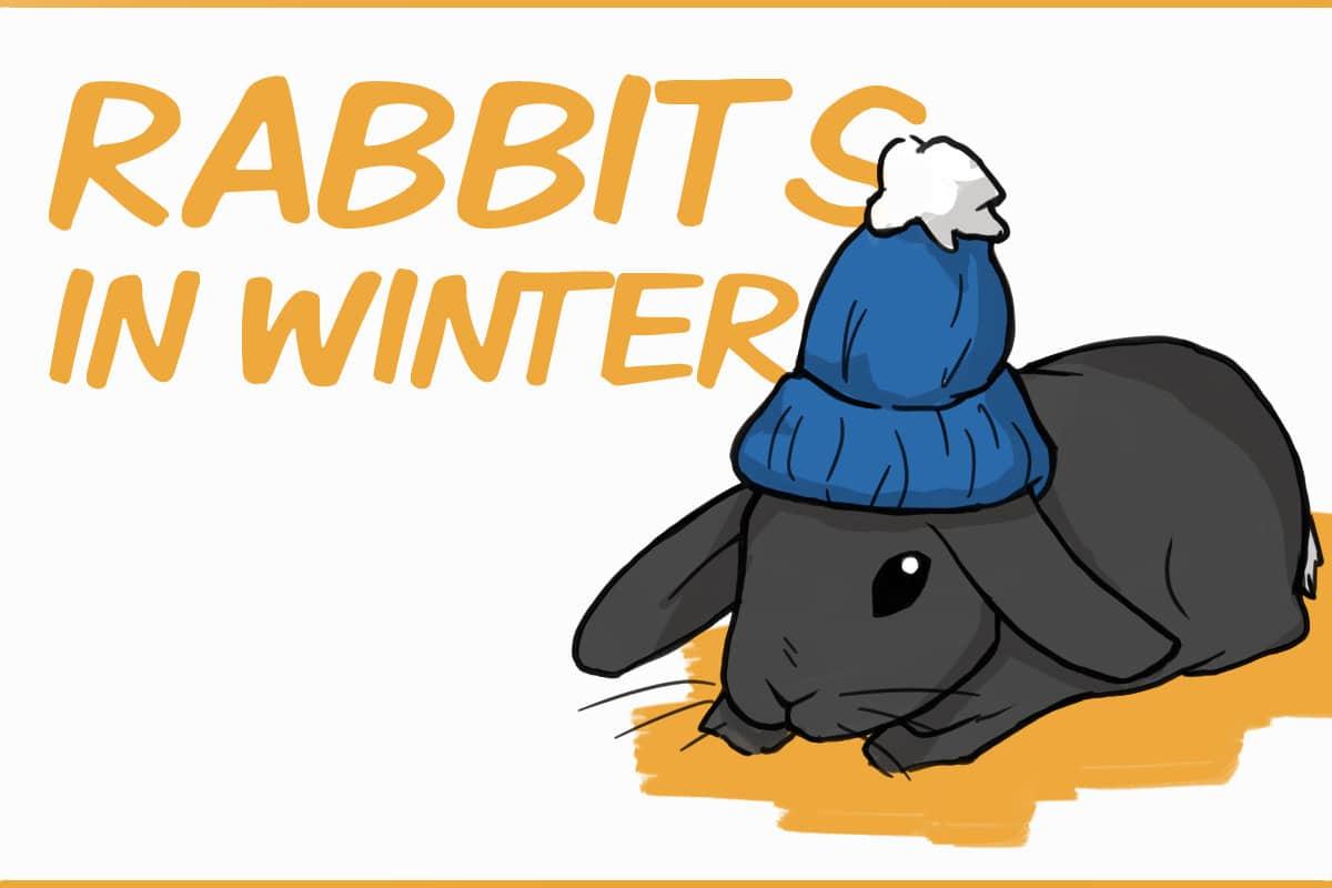 rabbits in winter