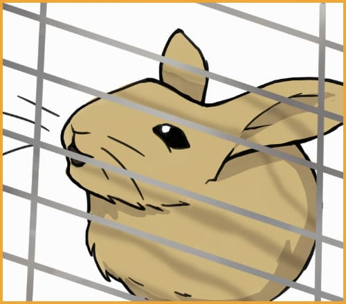 rabbit biting on cage