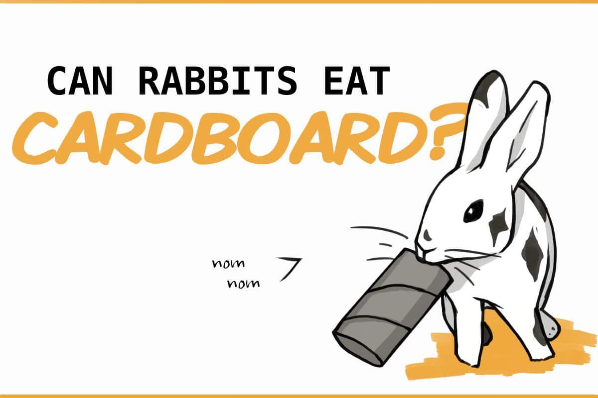 can rabbits eat cardboard?