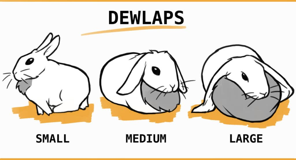 examples of small, medium and large dewlaps