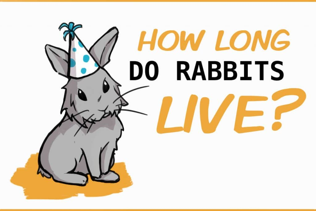 The Lifespan Of A Rabbit They Live Longer Than You Think