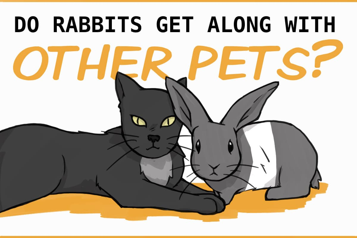 Do rabbits get along with other pets?