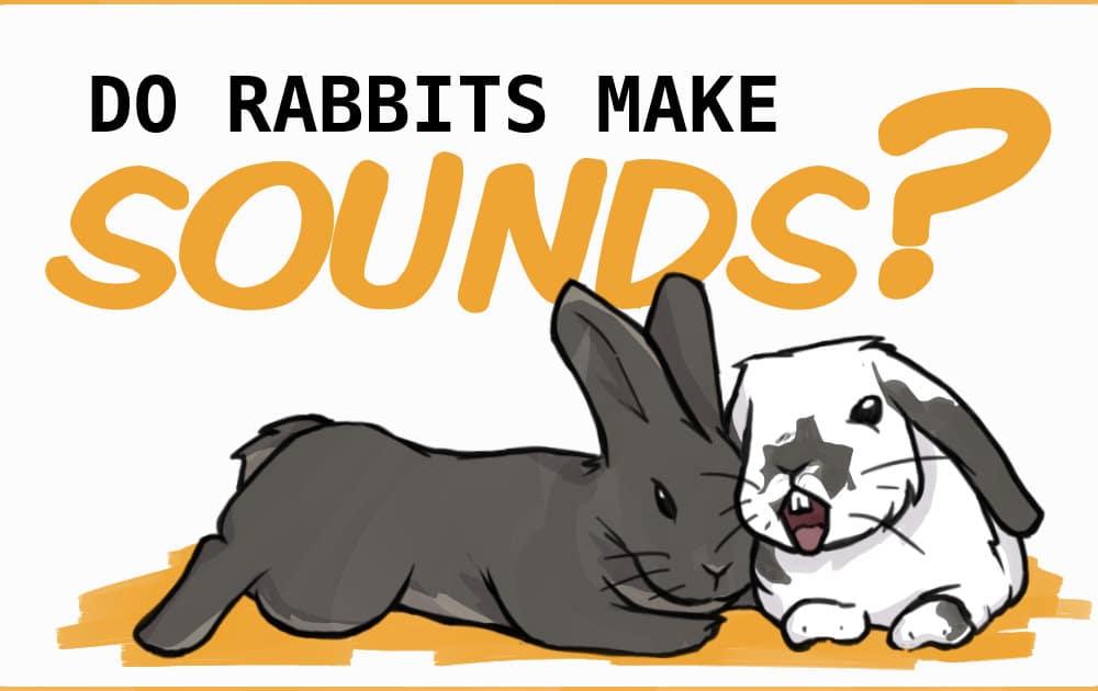 do rabbits make sounds?