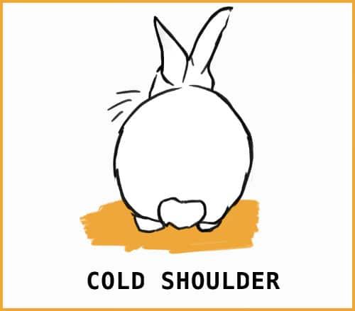 rabbit giving the cold shoulder