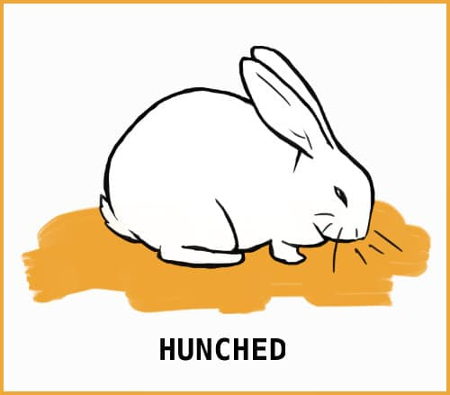 hunched rabbit sitting position