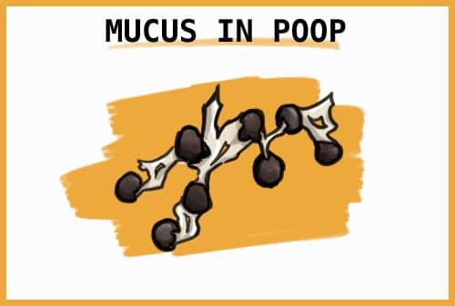 mucus in rabbit poop