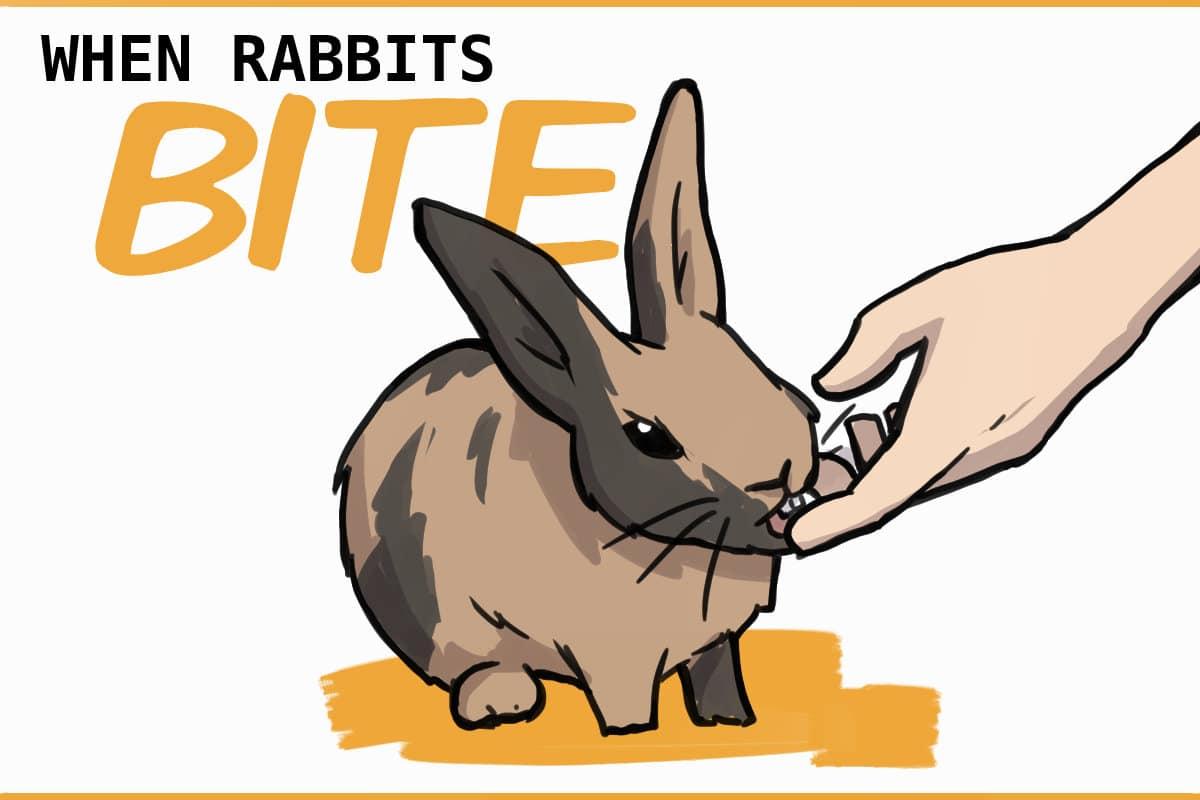 aggressive rabbits bite