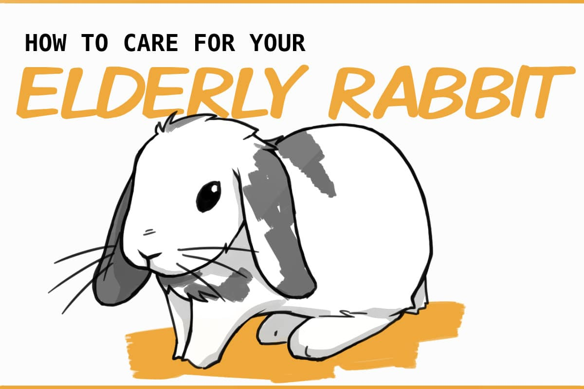 how to care for your elderly rabbit.