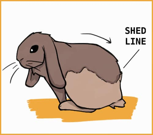 rabbit shed line