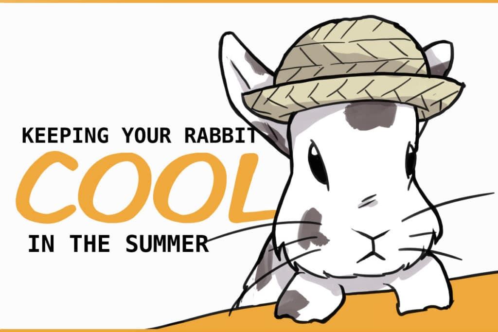 keep rabbits cool summer