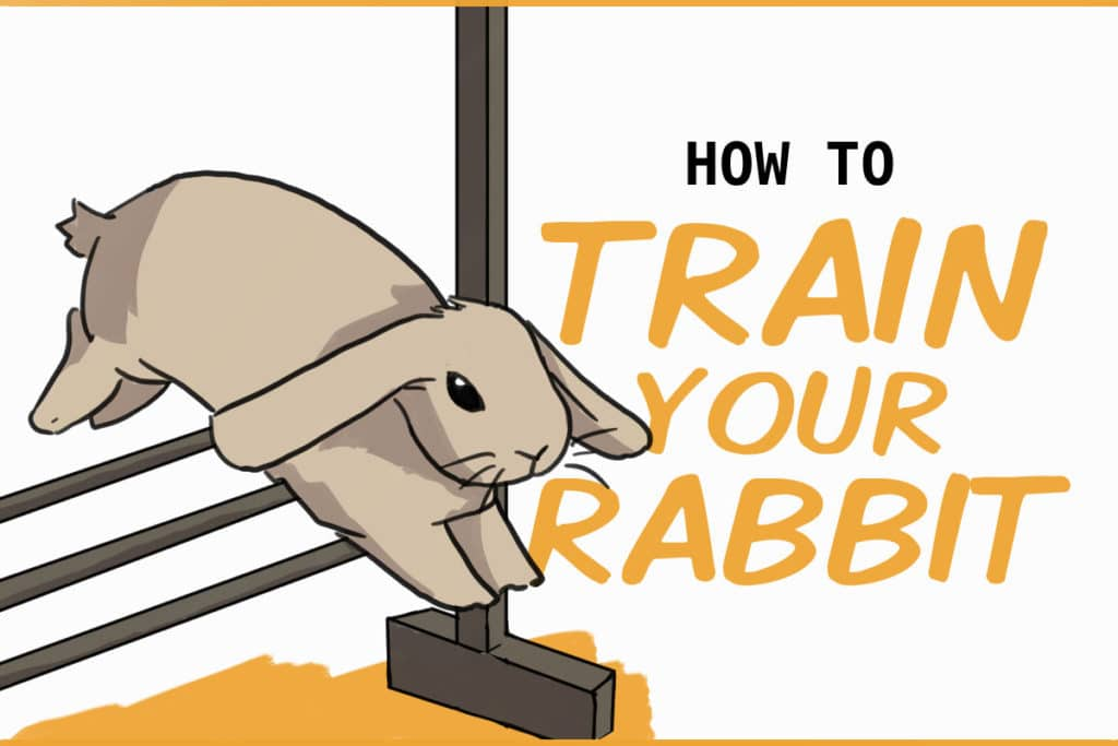 how to train your rabbit