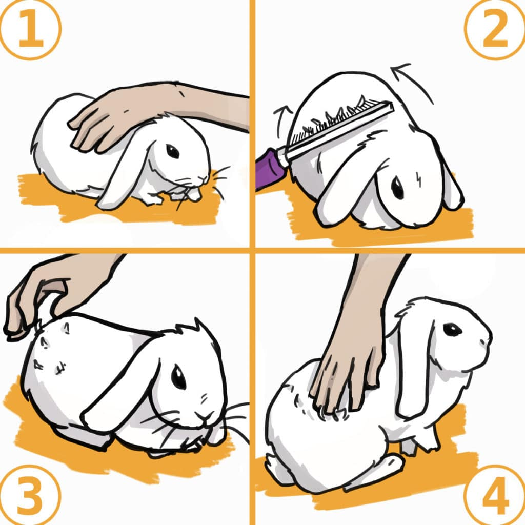 How to groom your rabbit