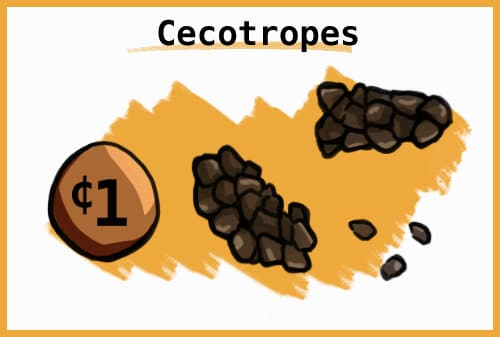 CECOTROPES
