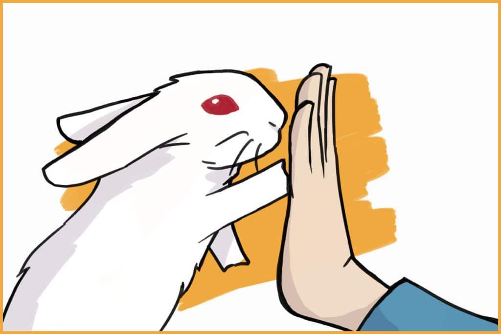 clicker training a rabbit