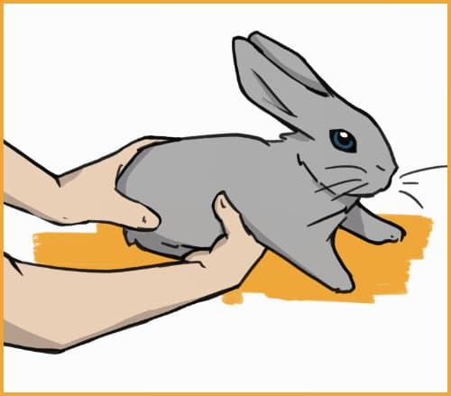 how to pick up a rabbit