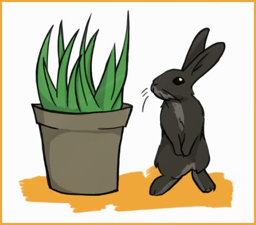 a rabbit and a houseplant