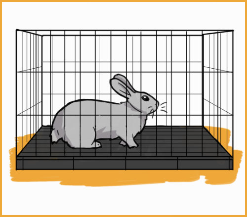 rabbit in a small cage