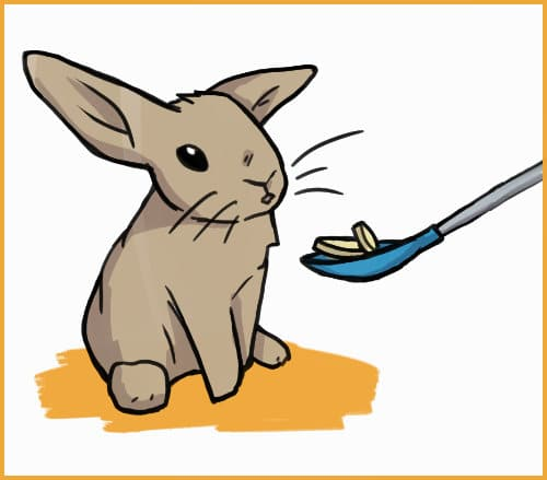 spoon feeding a rabbit