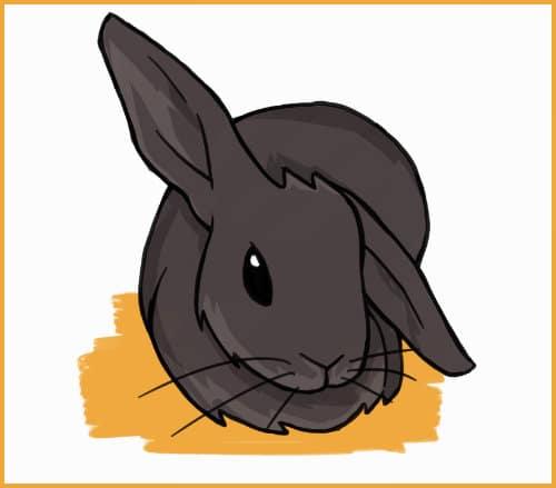 half lop rabbits