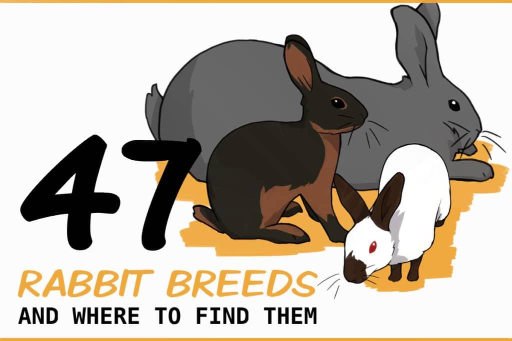 47 RABBIT BREEDS