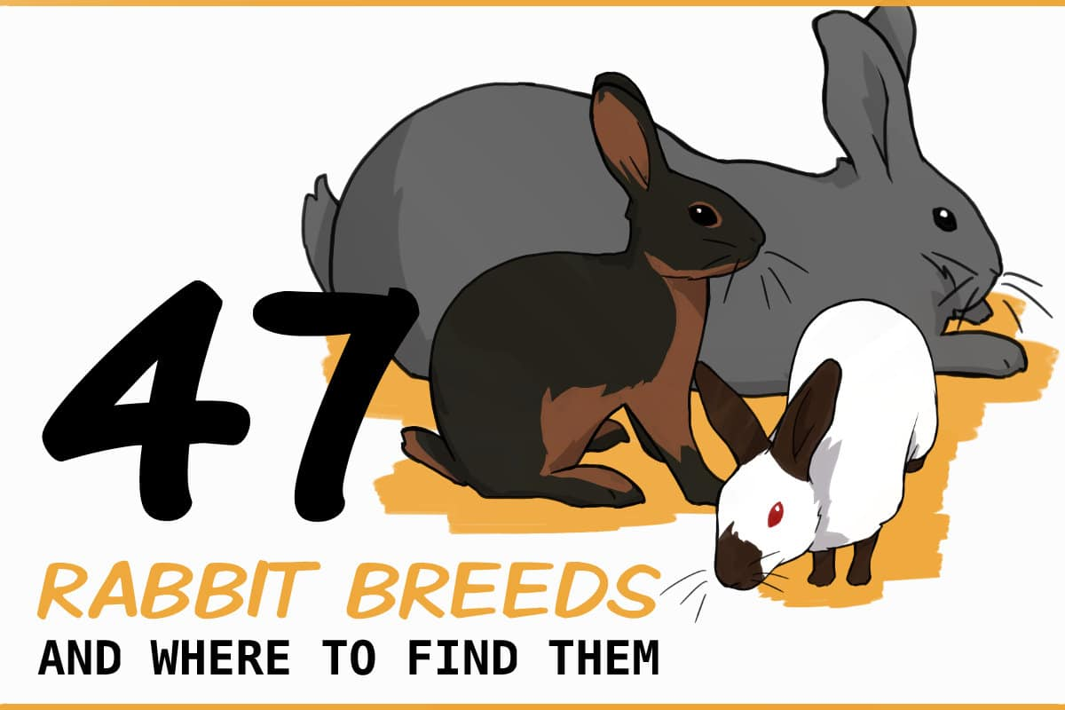 47 RABBIT BREEDS