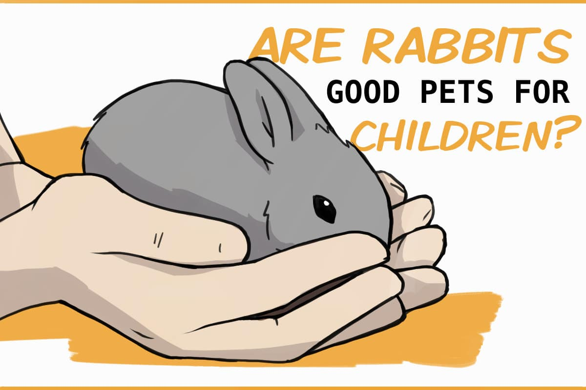 RABBITS PETS FOR CHILDREN