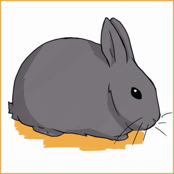 STANDARD CHINCHILLA