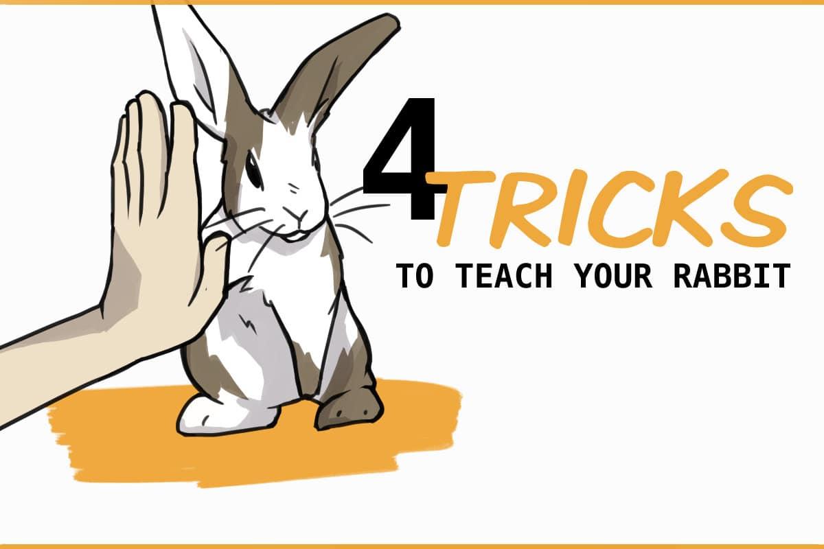 4 tricks to teach your rabbit