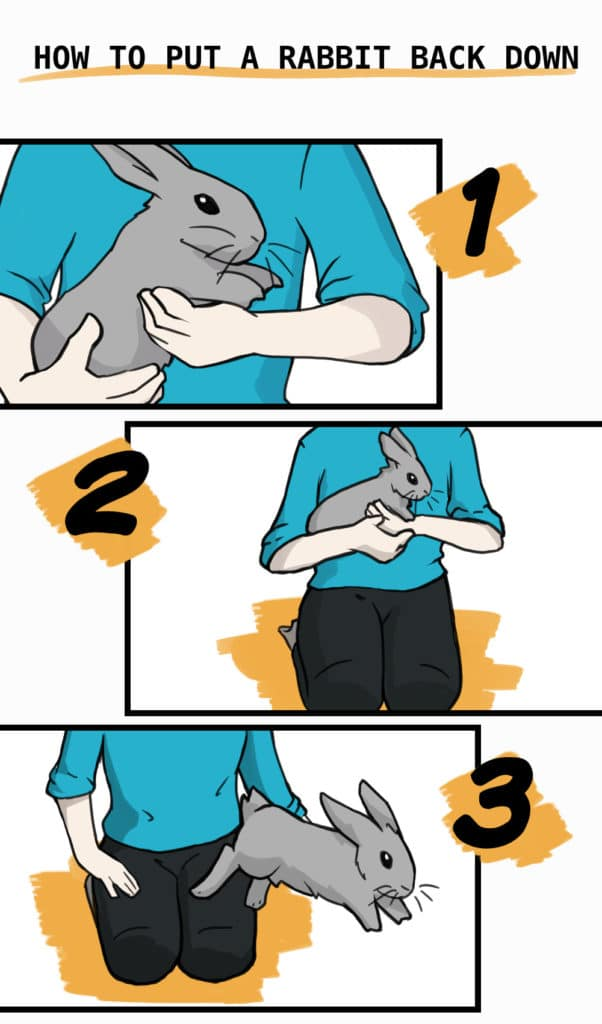How to put a rabbit on the ground