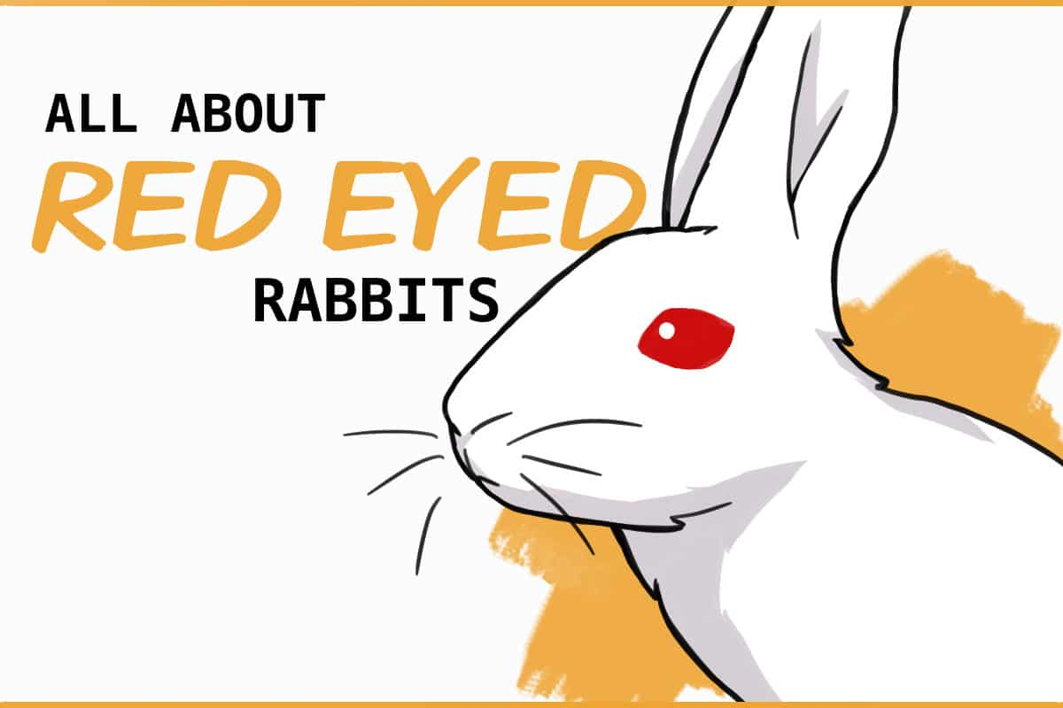 Why Do Some Rabbits Have Red Eyes