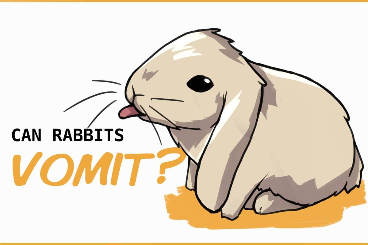 can rabbits vomit?