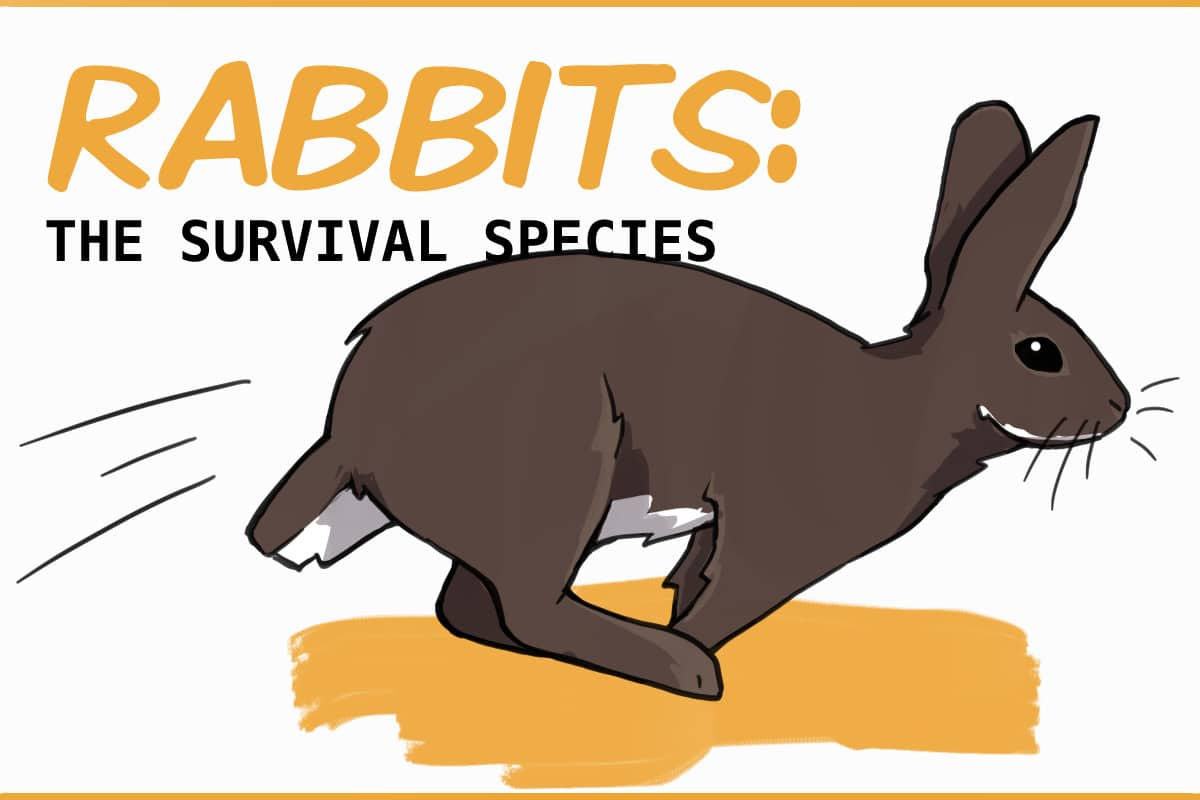 RABBIT SURVIVAL SPECIES