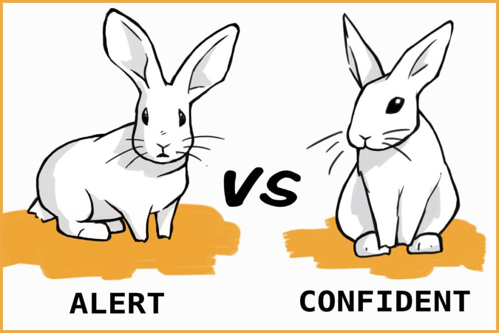 alert vs confident rabbit