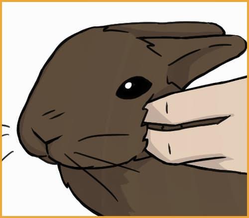rabbit cheek teeth check