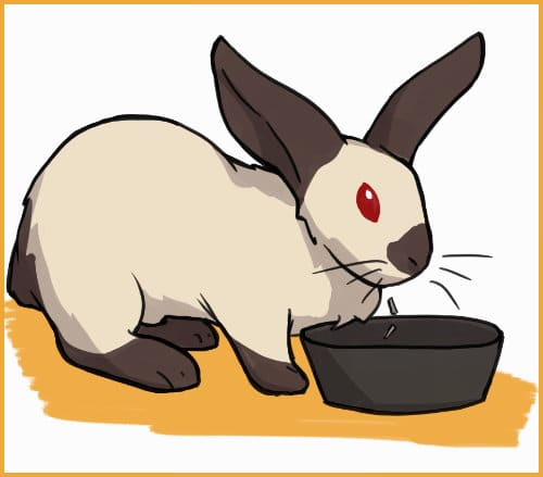 changing eating habits in rabbits