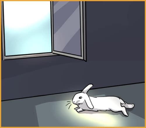 OPEN WINDOW SUNLIGH